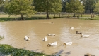 ducks - greenwell springs home for sale