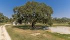 oak tree - greenwell springs home for sale